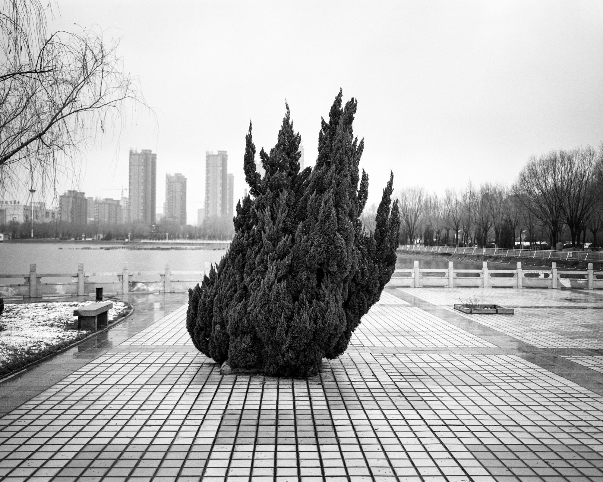 Artificial Landscape 1